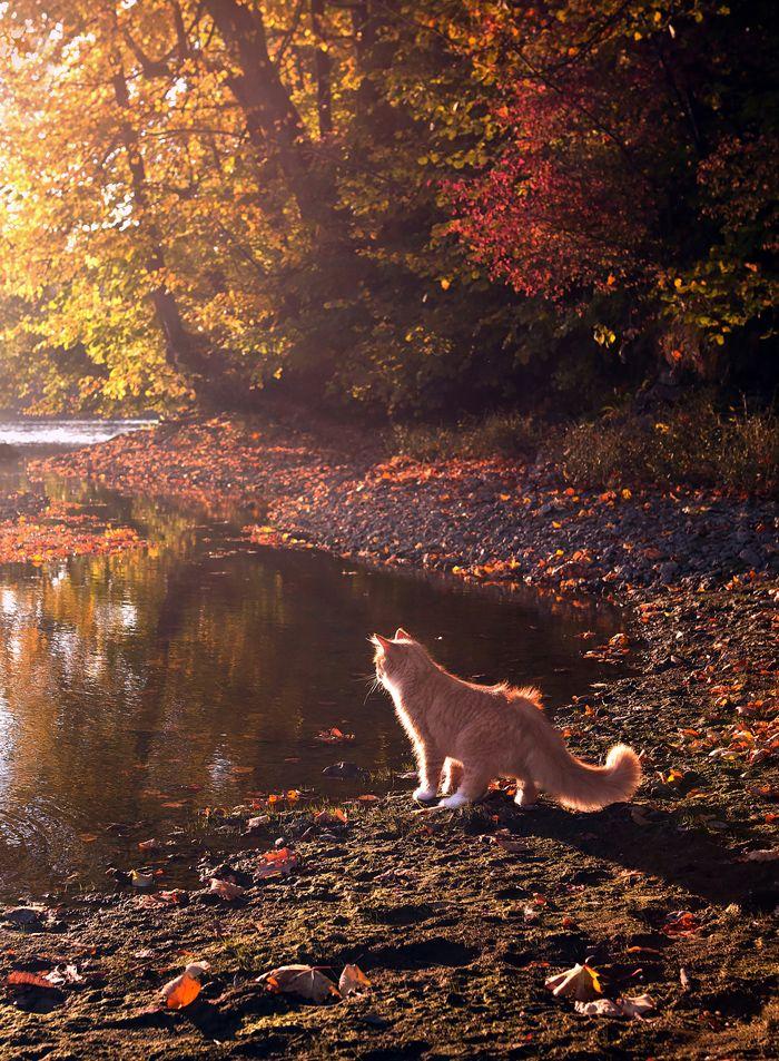 Кот цвета Осень