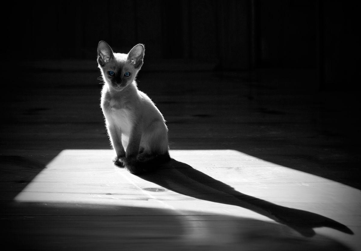 Кот в квадрате