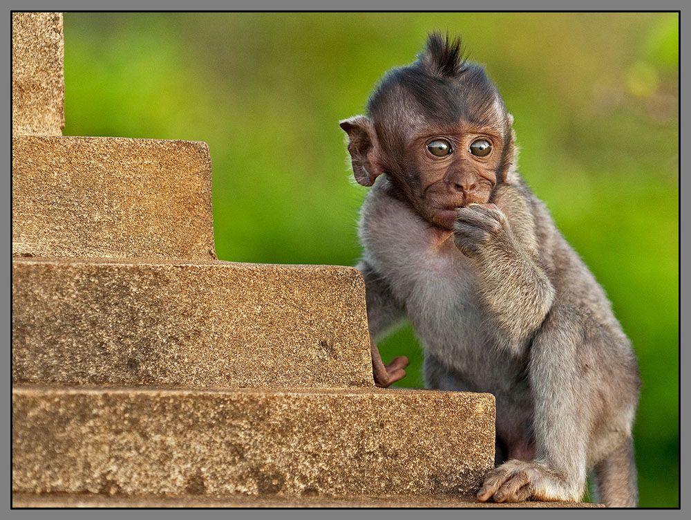 Когда то очень давно мы шли по лестнице эволюции паралелльно...