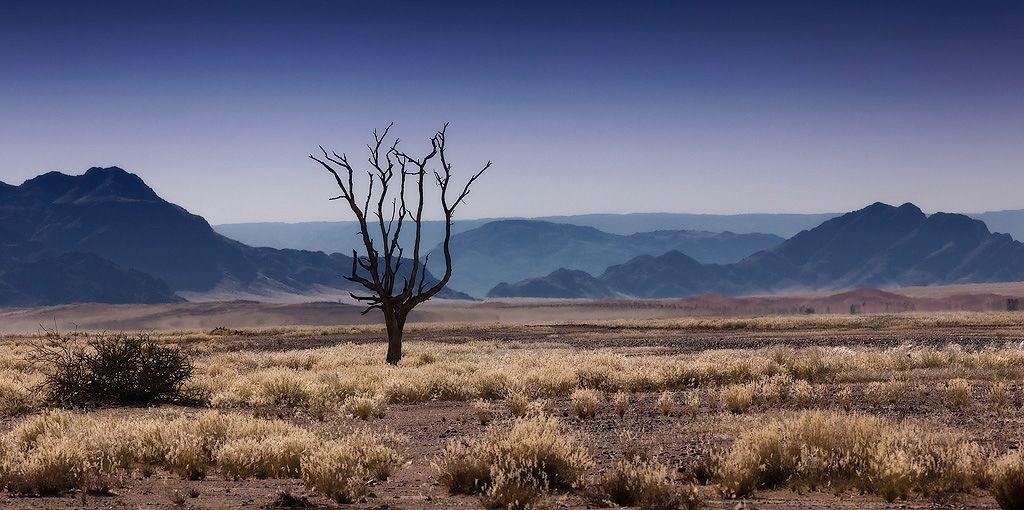 пустыне около 80 миллионов лет. Здесь ничего не изменилось со времен динозавров