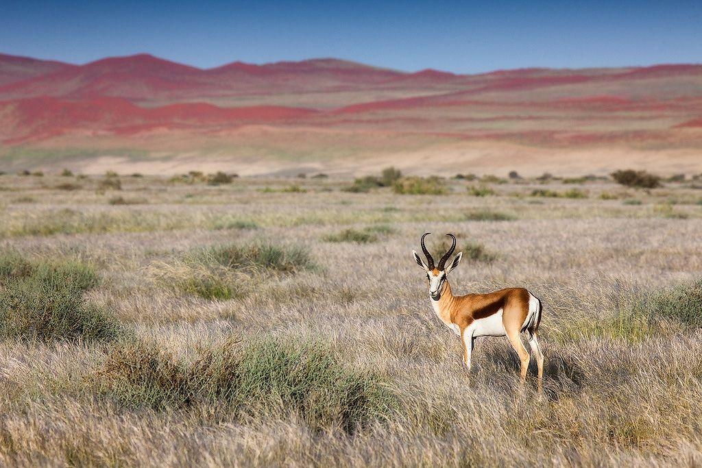 На юге большую часть поверхности земли покрывает песок, жёлто-серый вблизи побережья и кирпично-красный во внутренних районах пустыни.
