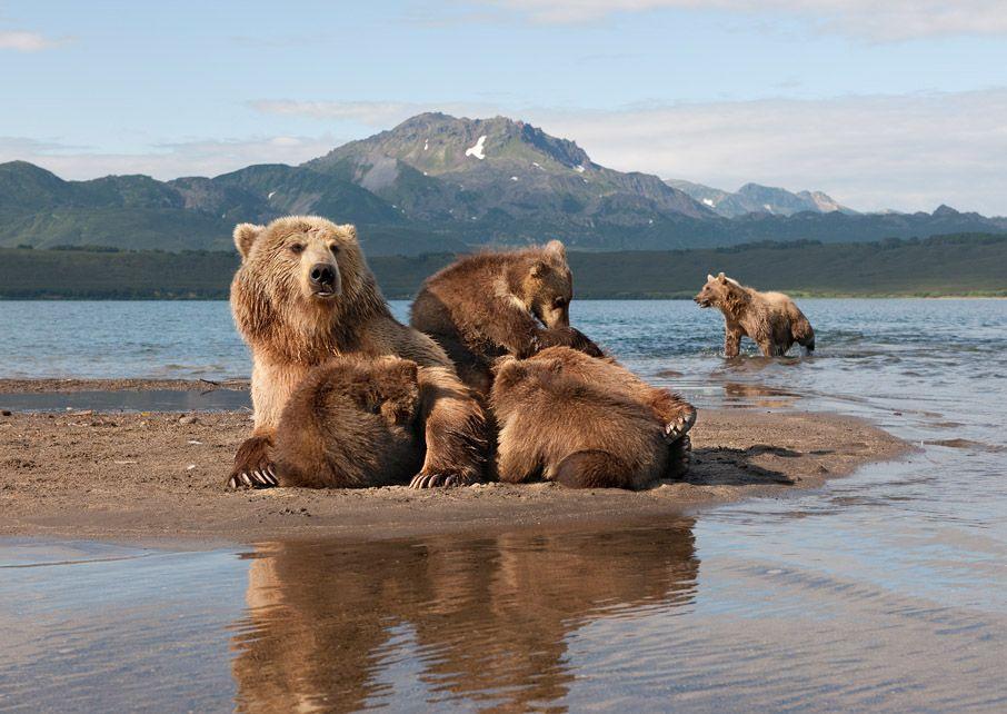 После поедания рыбки Блондинка кормила своих малышей и наступал тихий час.