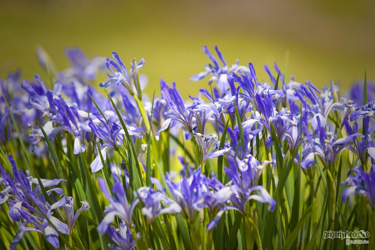 В бассейне реки сложился уникальный микроклимат, и здесь можно встретить очень редкие растения. Например, степную разновидность карликового ириса (лат. Iris pumila).