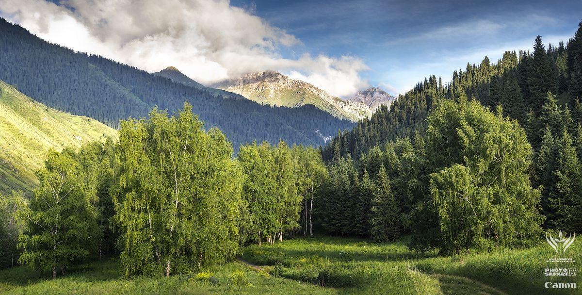 некоторые горные ущелья особенно красивы благодаря березовым рощам