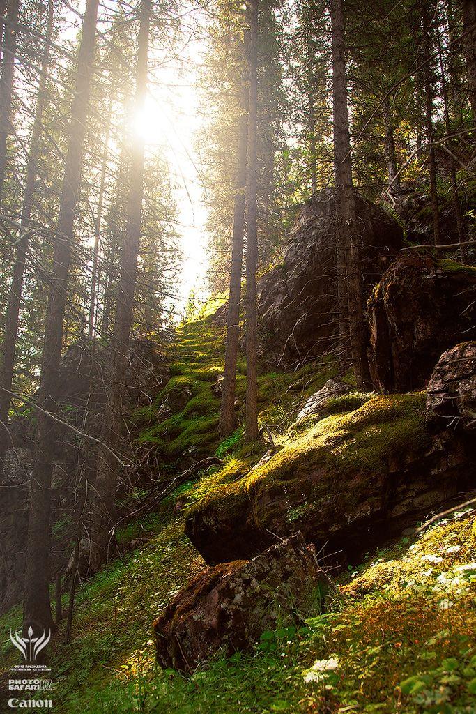 хвойные леса растут до 2800 метров над уровнем моря, на северных склонах гор