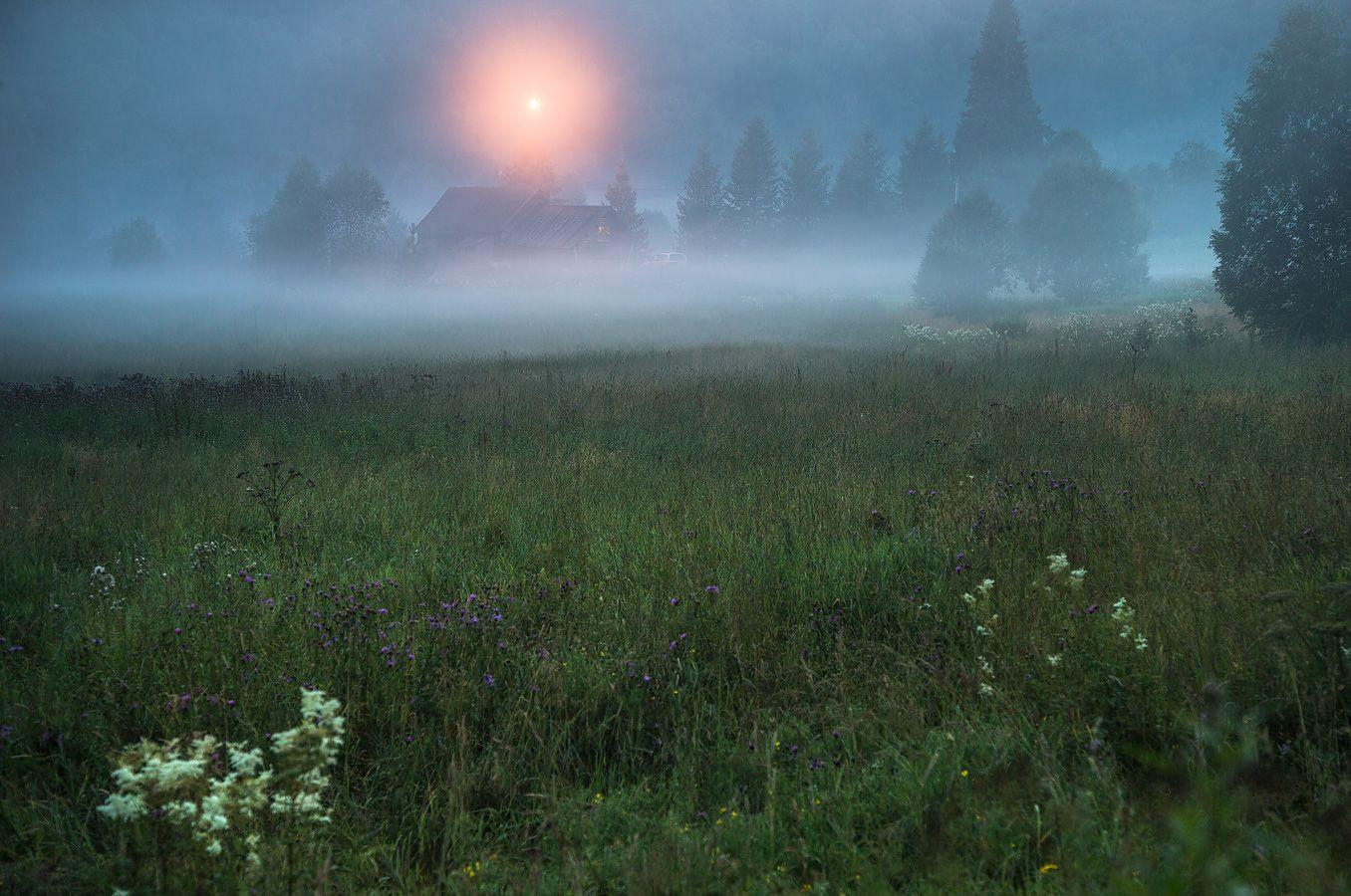 7. А по всем лугам стелется не только туман, но и чудный, мягкий аромат таволги (та, что цвета сливок)...
