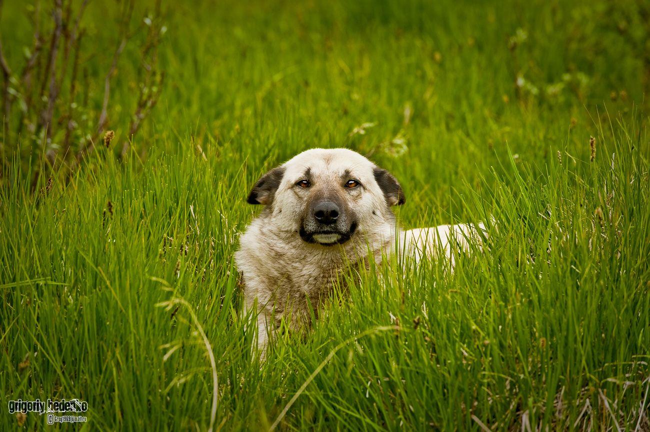 Симпатичный пес, живущий на высокогорном пограничном посту.