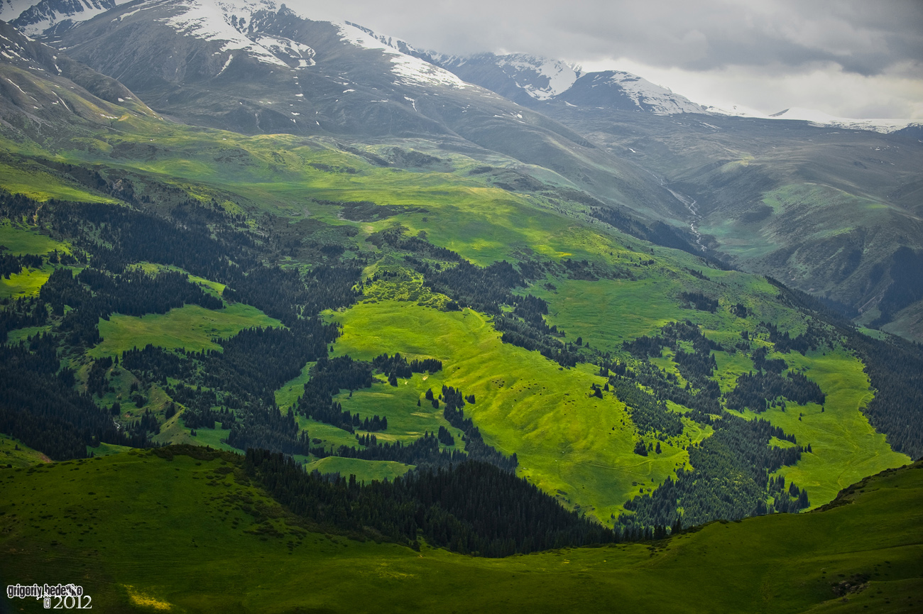 Реликтовые мОховые ельники на Тургенском плато.