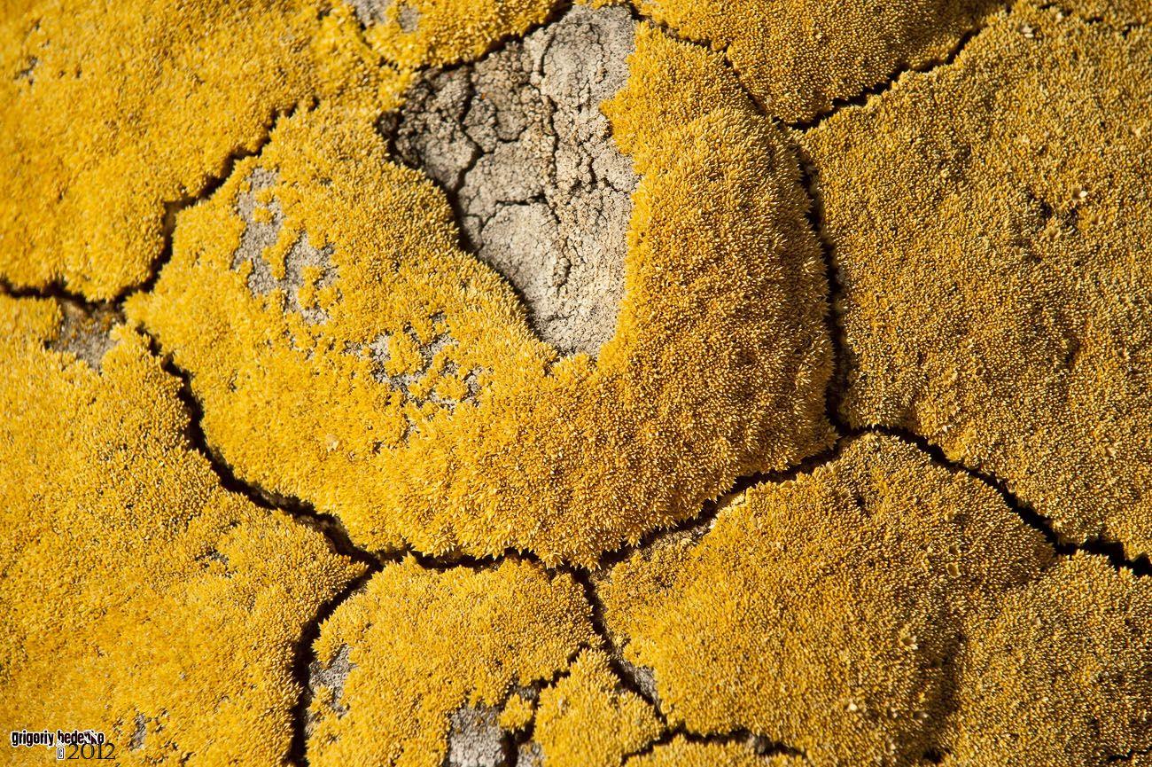 Моренная растительность имеет сезонный цикл вегетации. Пожелтевший мох выглядит чрезвычайно эстетично.