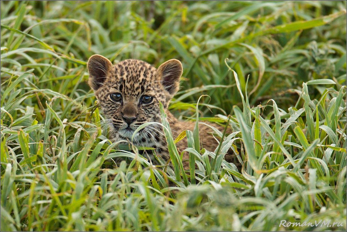 После он пытался пербраться по густой траве на другое дерево к с воей маме, чтобы откушать свежего матеренского молочка.