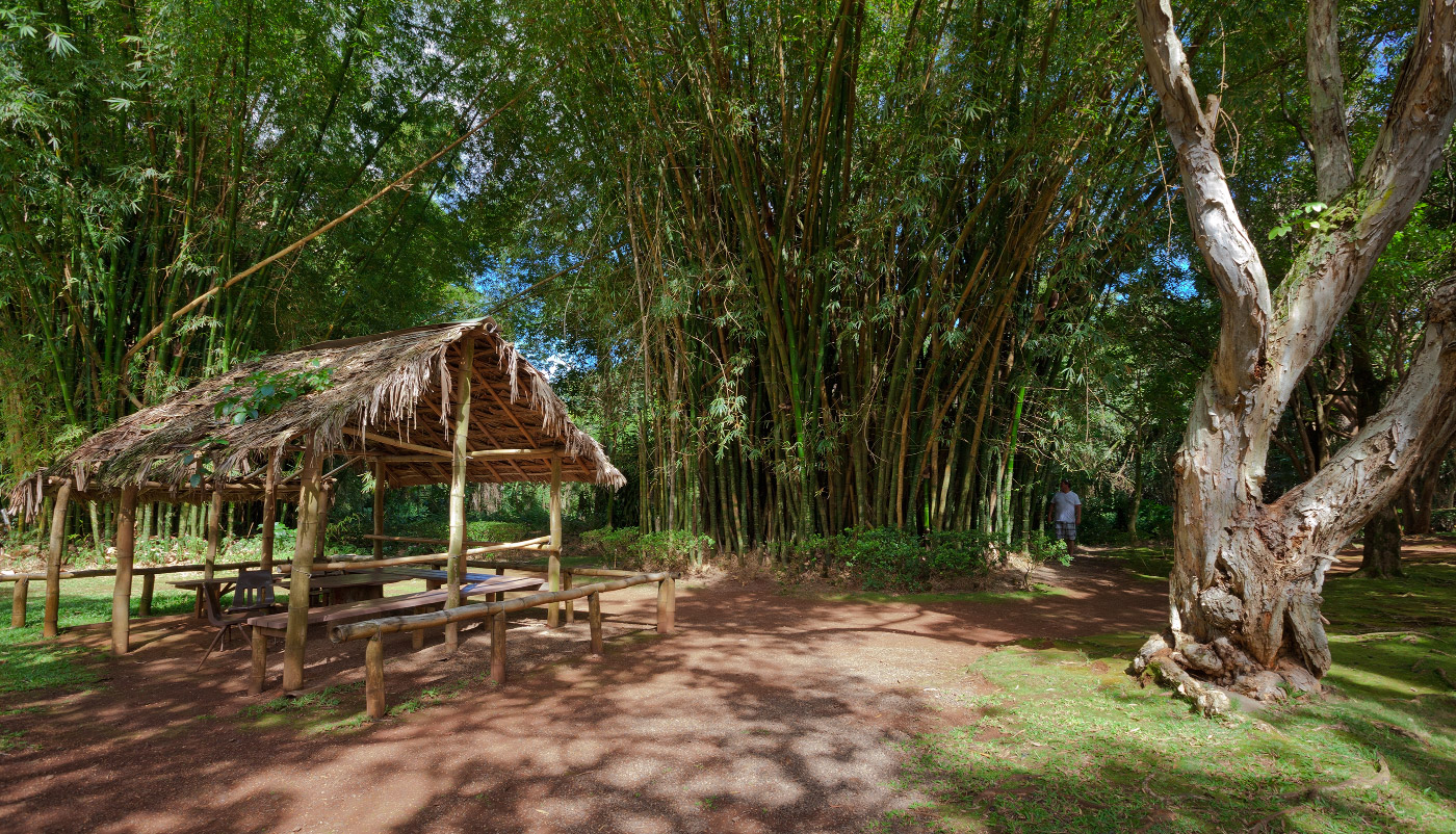 10. Храм Бёдо-ин ежегодно посещают тысячи туристов и очень многим из них хочется оставить метку на память храму. Обычно эти «художества» можно найти в бамбуковой роще. А один из таких творцов был «пойман» на месте. Я окрыла рот в защиту окружающей среды. Он мне сказал, чтобы я заткнулась и быстро ушел.