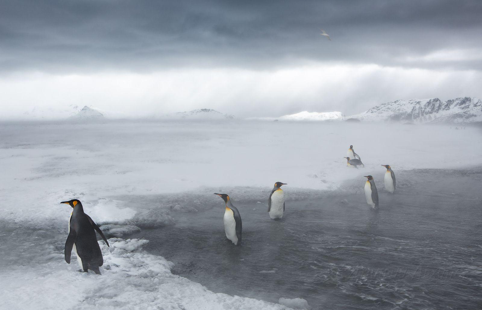 Короли Антарктики