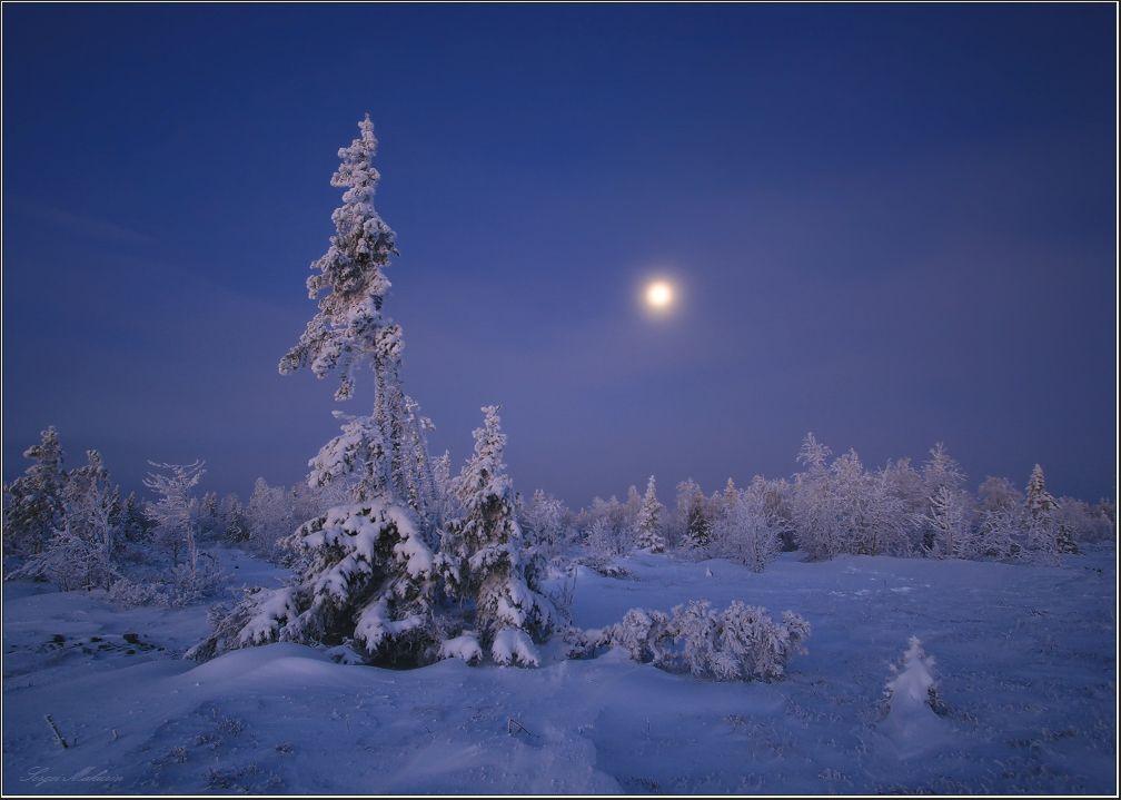 Зимние песни под луной