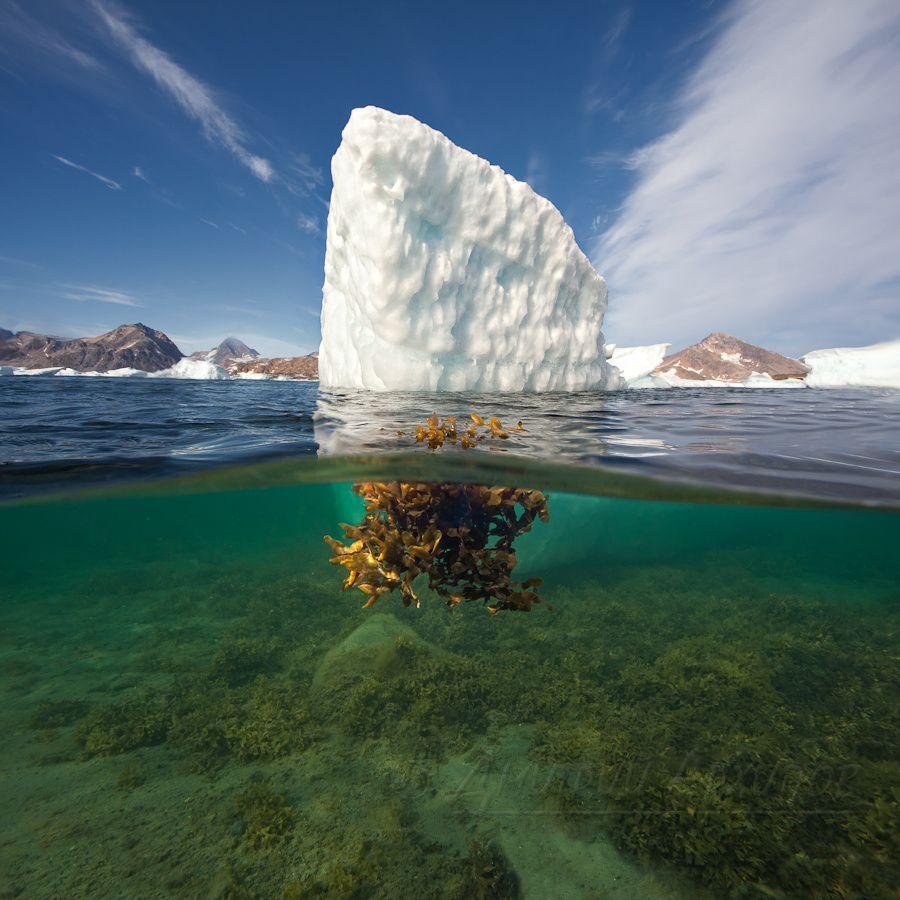 Восточная Гренландия.    -Похоже я первый ныряльщик в этом фьорде… а сейчас могу стать и последним… Пронеслось у меня в голове, когда я увидел моторную лодку охотника-инуита и ее хозяина в ней с карабином наизготовку. Положение более чем идиотское. Я в гидрокостюме, в воде, посреди бухты наполовину забитой айсбергами, снимаю сплит. До берега метров 200. И вот ко мне приближается охотник за нерпами. Инуиты это практически наши чукчи, охотники и алкоголики (у них нет какого-то фермента, отвечающего за расщепление спирта в желудке, поэтому спиваются почти сразу). С детства живут охотой, стреляют во все, что движется. Тем более, что охота на нерпу требует мгновенной реакции, увидел голову нерпы – стреляй сразу, через секунду нырнет. На таком расстоянии голова дайвера чертовски похожа на голову нерпы со всеми вытекающими последствиями… Да он и представить себе не может, что кроме тюленей кто то может быть в воде. Первую мысль рвануть к берегу я отбросил сразу, далеко…
