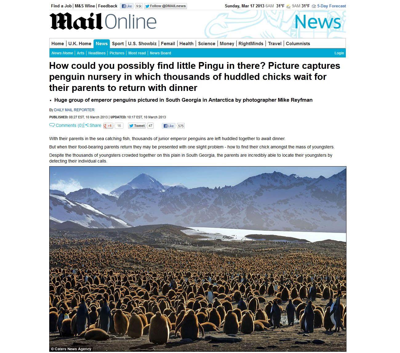 """И немного о грустном. Законтачило меня британское новостное агентство, снабжающее новостями британскую (и не только) прессу. Очень им птенцы пингвинячьи понравились. Давай, говорят, мы сделаем материал и предложим его разным изданиям. Чего-то вместе заработаем. От меня требовалось только фотографии под печать и я согласился. Попутно я послал англичанам коротенькую историю, которая у меня уже была и спросил, не нужно-ли подготовить фото для веба.  Нет, сказали англичане, фотографии нам не нужны и историю мы напишем сами. Позвонил мне их """"писатель"""" - взял интрвью. Я ему подробно все рассказал....  Первая публикация появилась в Дэйли Мэйл... С удивлением обнаружил, что мои королевские пингвины стали императорскими, переселились в Антарктиду а что стало с фотографиями :((( можно посмотреть на линке в первом комментарии."""