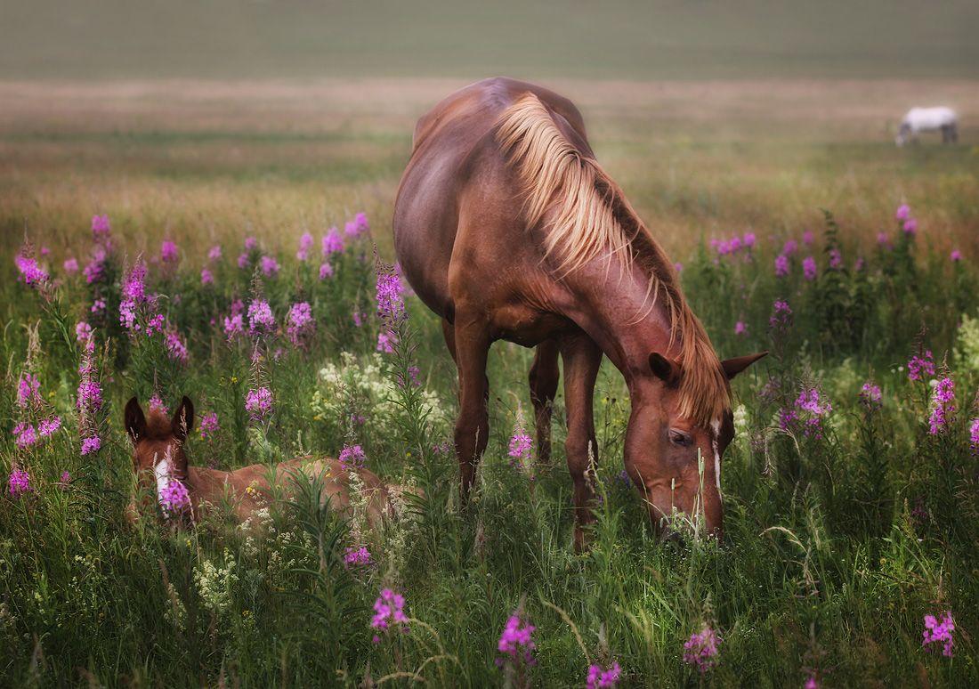 Лошадка Для Детей картинки, бесплатные обои и фото 66