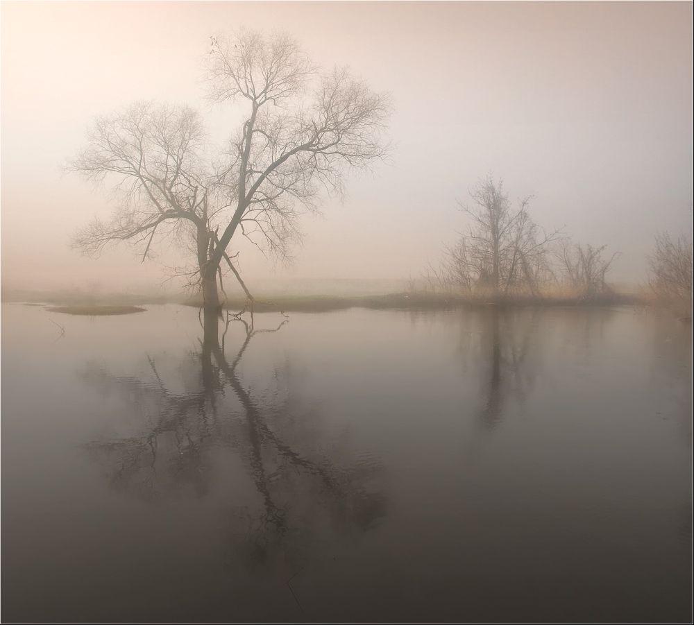 Туманная тишина... хотя на самом деле уже птицы распелись...