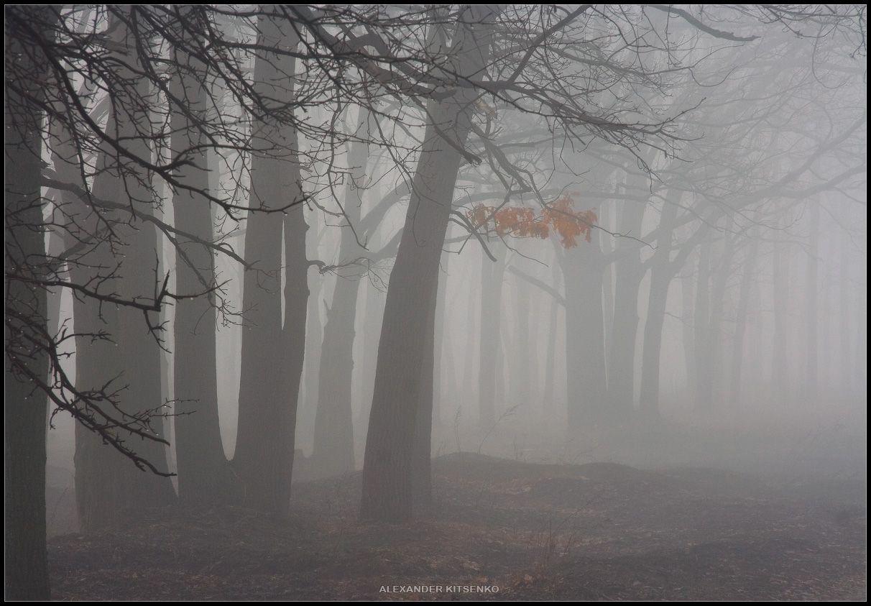 Слезы леса... его так замучали пикники, битые стекла глубоко вонзились в землю, а лейкопластыри полиэтилена делают только больнее....