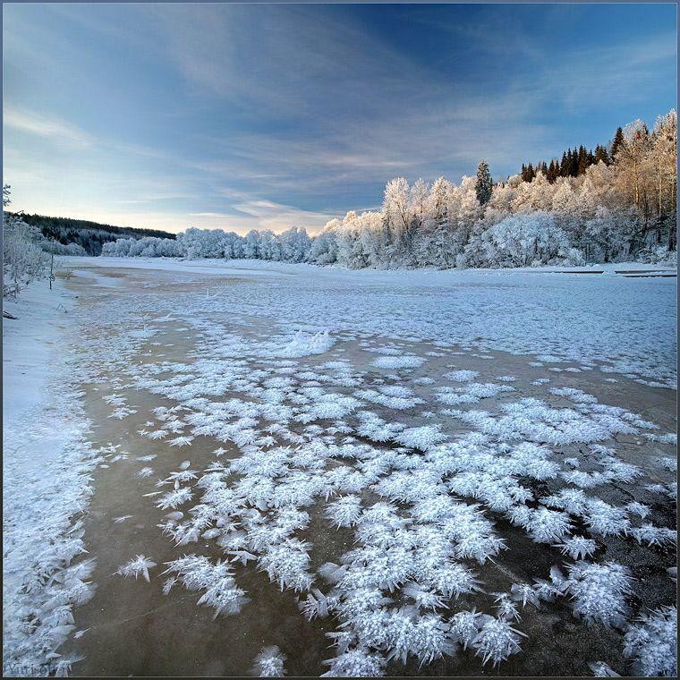 """Удивительные деньки с Димой Лялиным у меня на реке в деревне - чудный урожай """"ёжиков"""" при минус 28..."""