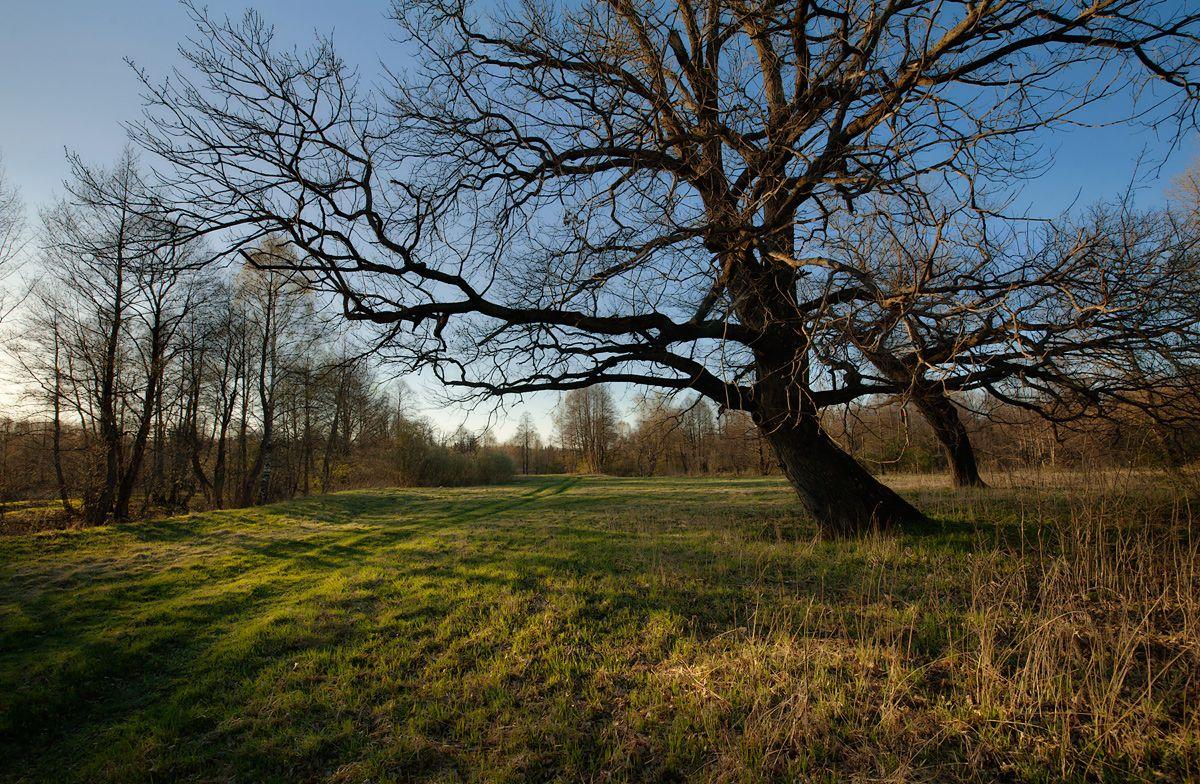 05 Косые лучи солнца нарисовали совершенно новые объёмы на моей любимой лужайке под дубом…