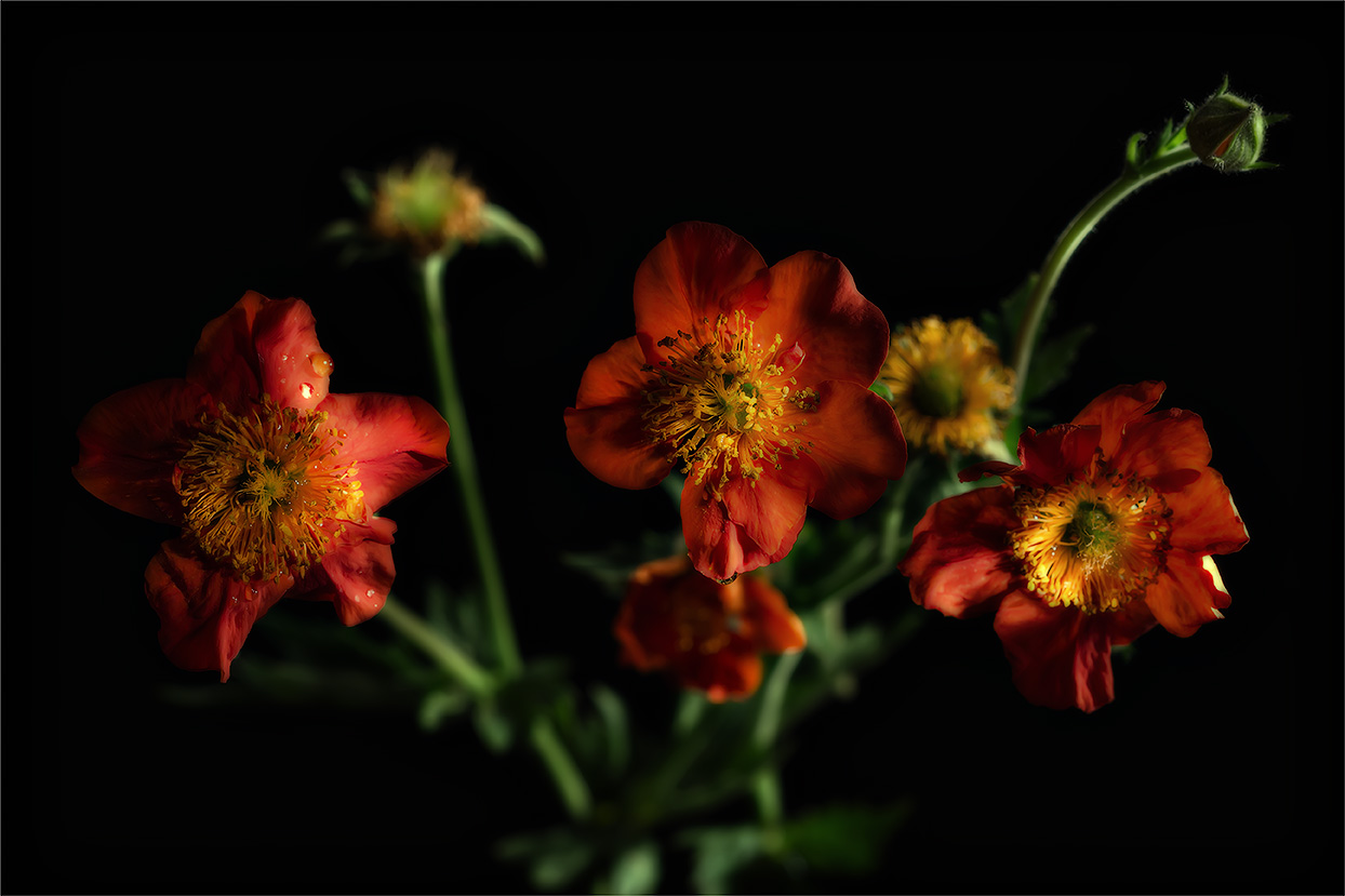 Цветики на чёрном-2