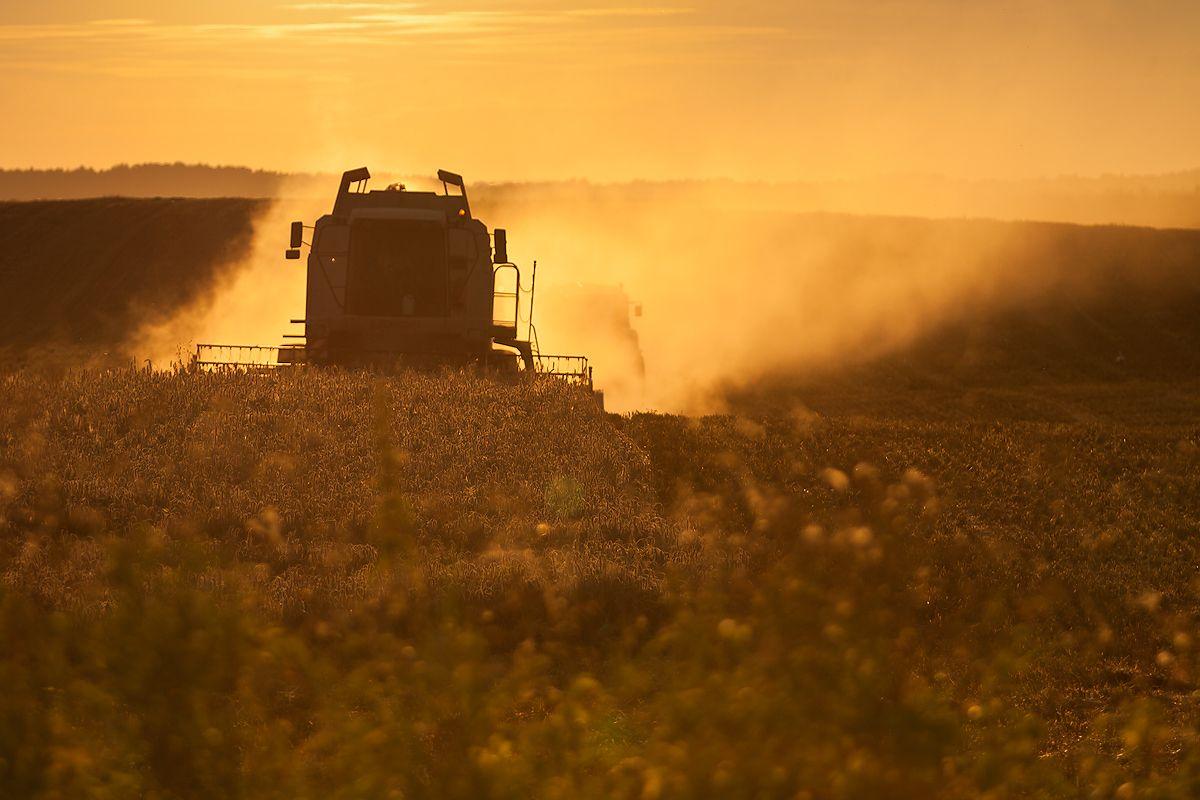Polish Harvest