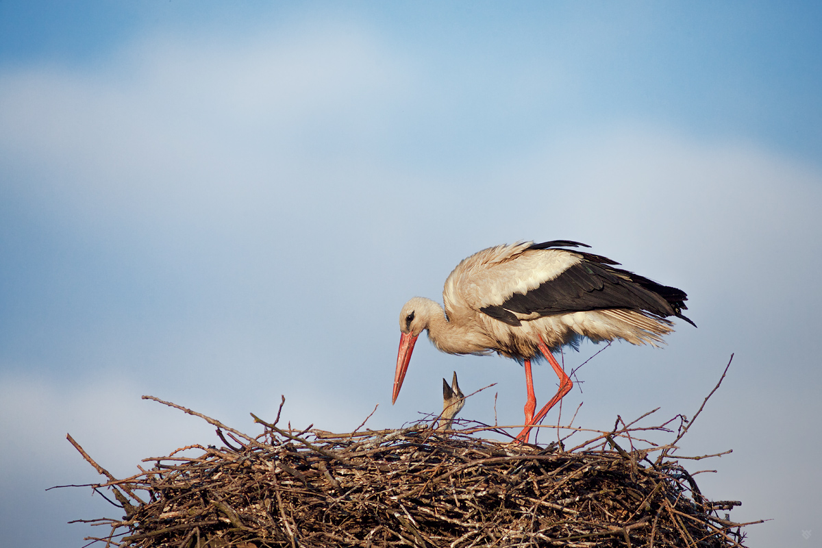 The stork's nest (mother and child)