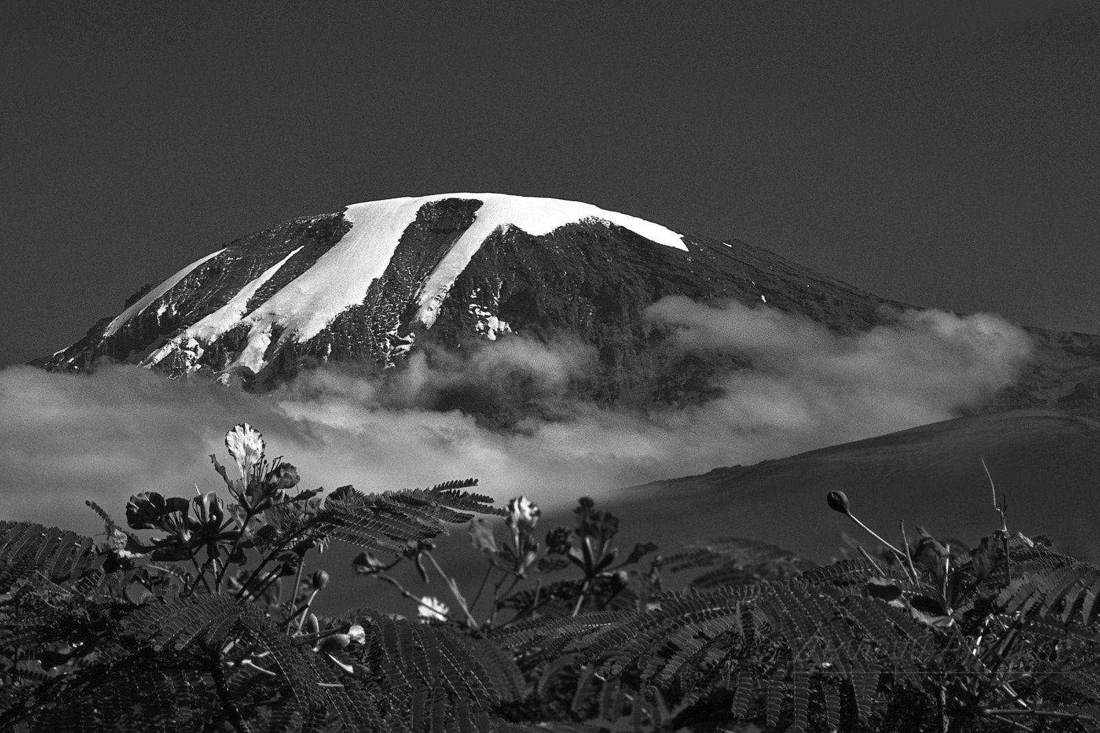 Самый высокий вулкан африки 5 фотография