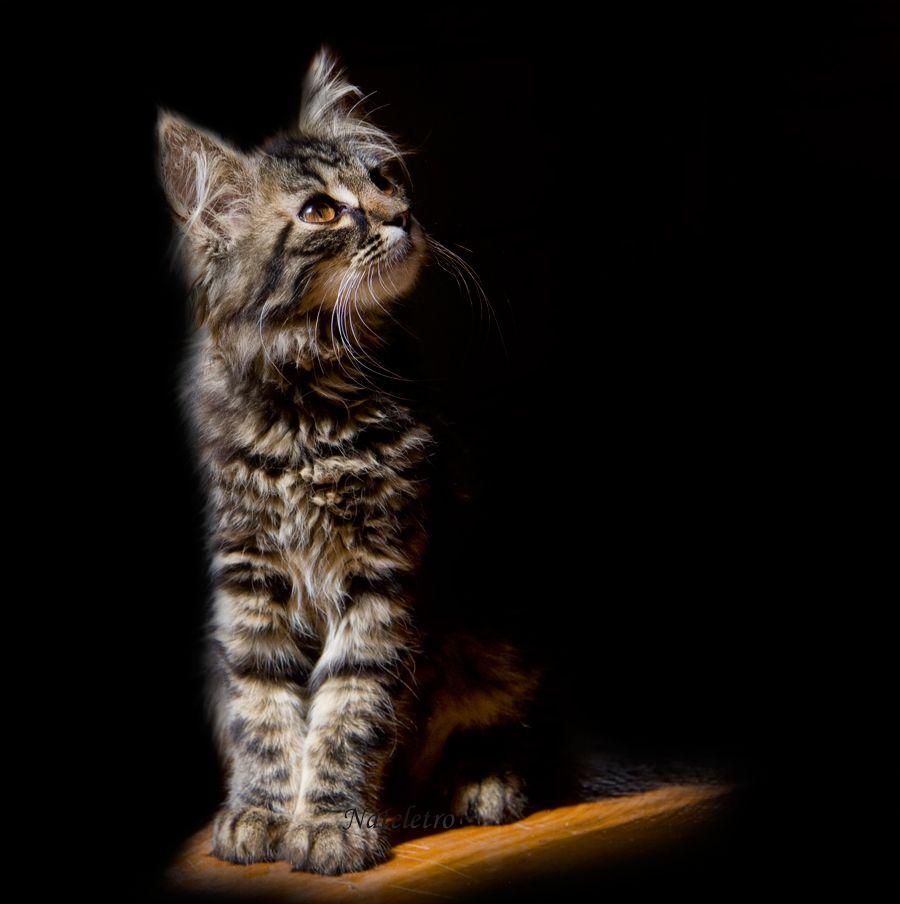«У кого есть кошка, тот может не бояться одиночества» Даниель Дефо