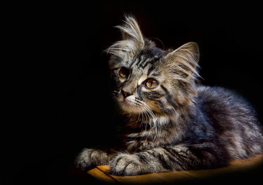 """""""Жизнь плюс кошка — это удивительное сочетание, я клянусь вам!"""" Райнер Мария Рильке."""
