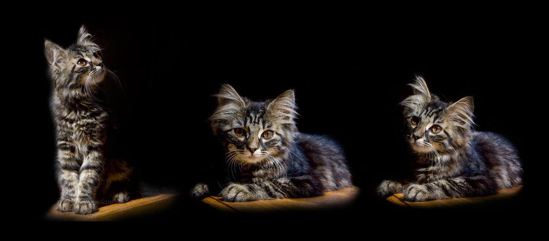 """""""Даже самое маленькое из кошачьих - совершенство"""". Леонардо да Винчи"""