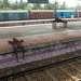Или прилегли отдохнуть в ожидании поезда (южная Индия)