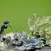 «Долгая дорога домой» Черный муравей-древоточец,  Прибайкалье, окрестности поселка Большие Коты. Один из первых кадров, снятых в окрестностях поселка Большие Коты в 2010 году.