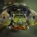 «Водяной» Личинки стрекоз — распространенные обитатели пресноводных водоемов: прудов, озер и болот. Хищники, живут и стерегут добычу на дне и стеблях водных растений.