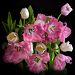Тюльпановый букет
