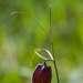 01 Этой весной, благодаря знакомым экологам из природоохранного фонда \