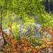 Молодые листочки осиновой поросли