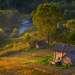 На берегу реки Оять. На снимке дом из вепсской деревни Васильевская.