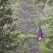 Молодой Белоплечий орлан. Вид занесён в Красную книгу России.