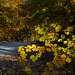 pastel colors of autumn