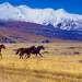 По степям далеких предков (степь Самаха, Алтай)