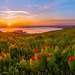 Мой любимый вид на Сенгилеевское водохранилище. На переднем плане цветёт пион тонколистный.