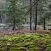 Лесной уголок