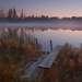 Ночь стремительно опускалась мне на плечи. . .туман с болота потянулся к озеру...ночные звуки неприятно холодили спину. . .но сил уйти от этой красоты не было...