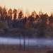 Туман опутывал ноги, норовя оставить меня на болоте.....