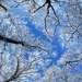 панорамка, камера телефона Nokia X2 , CS 5