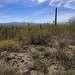 Флора пустыни очень разнообразна. Среди них наиболее богато представлены виды семейств сложноцветных, злаков, бобовых, гречишных, кактусовых, молочайных. Среди жизненных форм наибольшим числом видов представлены ксерофиты (эфемеры и другие однолетники). Среди кустарников и деревьев в пустыне Сонора обращает на себя внимание — железное дерево, слоновое дерево и идрия. Суккуленты не занимают ведущего места (кактусы и другие).