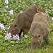 На языке индейцев гуарани слово капибара означает «господин трав». Живут эти животные обычно небольшими группами (стадами). Стадо состоит из доминирующего самца, нескольких самок, подчиненных самцов и детенышей.