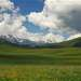 Альпийские луга, только Заилийские...