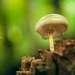 Ещё меня привлекли грибы, которые на вид были словно сделаны из молока - белые и блестящие, растущие на буковых пнях или непосредственно на самих деревьях.